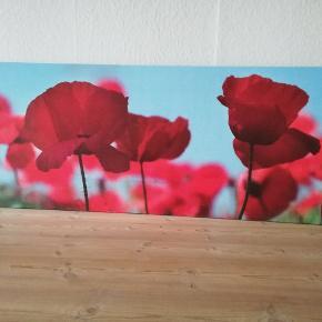 Valmue billede 58 x 144 cm
