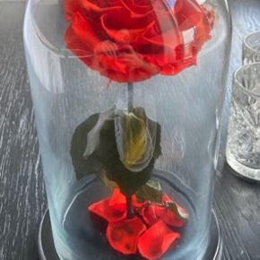 Sælger denne smukke rose i glas. Så fin som pynt / indretning. Minder om den fra Skønheden og udyret 🌹    #30dayssellout