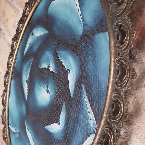 Turkis sukkulent tryk i oval messing ramme med glas.  29 cm. Bred 41 cm. Høj