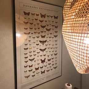 """Flot indrammet plakat med natsommerfugle. Plakaten er """"påklistret"""" og indrammet hos Kvist i Horsens, så den vil aldrig blive grim."""