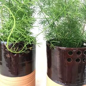 """plante i """"potte"""" 2 stk haves  165. Kr pr stk  Begge 300. Kr"""