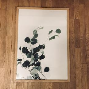 Fineste eucalyptus plakat med ramme 🌸 Kan afhentes i Aarhus  50x70