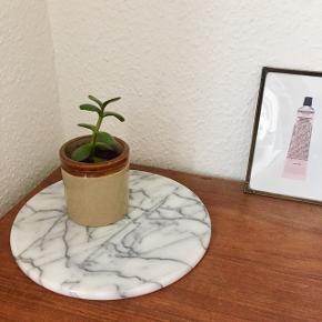 Sukkulent plante i engelsk keramik krukke fra Moira.  Sendes ikke, men kan afhentes i Aarhus lige ved Uni.  Søgeord: Plante urtepotteskjuler planter grøn keramik