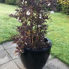 Stor sort krukke med plante. Krukken er 39 cm høj.