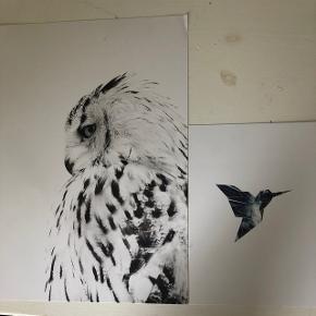 Desenio plakater, aldrig brugt Uden rammer. Ugle er (21x30cm) Kolibri er (13x18cm)