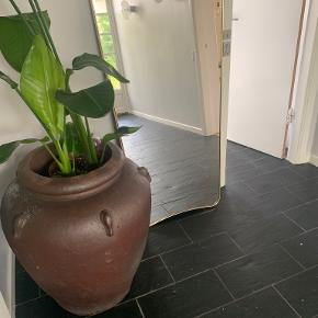 Rabens Saloner plante