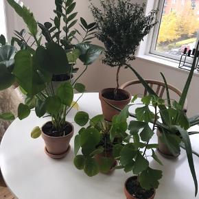 Diverse planter sælger med krukker. Afhentes Aarhus C.