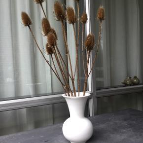 Evighedsbuket med Kæmpe Kartebolle eller Dipsacus på latinsk. Tre grene med sidegrene som vist på fotos. Meget dekorative som en solitær buket eller sammen med andre tørrede eller afskårne blomster. Vasen medfølger ikke.