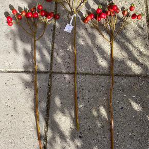 Lene Bjerre plante