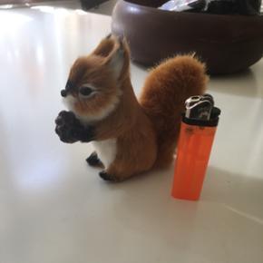 Sødt lille egern