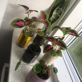 Planter i Potter.  14kr pr stk