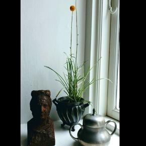 Fine metal sager. Tin potte (uden plante). H:10 cm Koster 130,- Lågkrukke / bonbonniere af tin. H: 6 cm Ø: 8 cm Kister 150,- Skulptur / buste af jern. H: 14,5 cm Koster 475,-