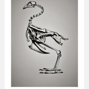 Hagendornhagen Bone Collection plakat 42x59 cm inkl. STRÖMBY Ikea stålramme