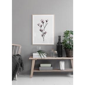 Desenio plakat med den smukkeste magnolia  størrelse: 13x18 ( billede 2 )   pris: 20 kr   fragt: 37 kr   ( ville anbefalde at købe denne sammen med noget andet )
