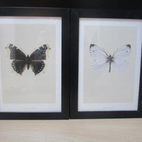 2 plakater fra hagedonhagen med sommerfugle I rammer fra Ikea