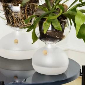 Holmegaard plante