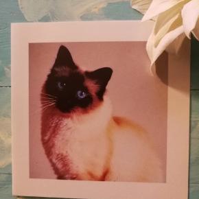 10 postkort med nuttede katte. De er ubrugte og I god stand. Kan leveres med konvolutter, hvis det ønskes. 5 kr pr styk. Alle for 44 kr.