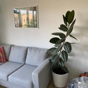 Stort flot gummi træ / plante 🌿🌱 Det er omkring 145-150 cm højt  Potte følger med hvis køber ønsker det  Kan hentes i Valby (der er elevator i bygningen 😉)   Er åben for bud!