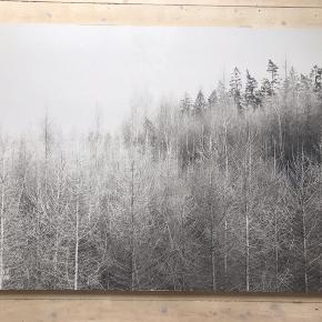 Super smukt og stort fotografi på alluminiumsplade. Fotografi af fotograf Rasmus Dengsøe: https://instagram.com/rasmusdengsoe_studio?igshid=rjb5ay86ixz9  Købt for 3500kr