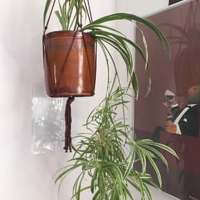 Væddeløber hængeplante med tilhørende krukke.  Planten er meget nem at holde.  Holbæk krukke 19x15 cm.   Hængestrop medfølger ikke.