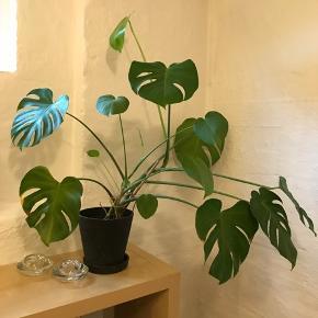 Sælger denne plante med potte fra Hay