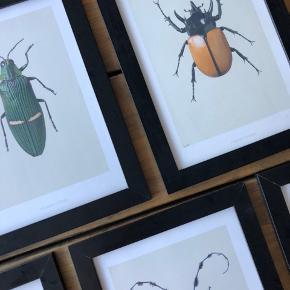 5 stk. Hägendornhägen plakater med forskellige insekter som motiv. Rammerne er fra IKEA (den eneste har en ridse) Sælges samlet og sendes ikke