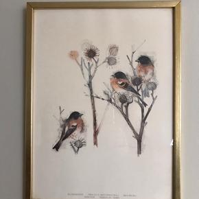 To smukke Mads Stage fuglebilleder i originale guldrammer. Hhv. halemejse og kvækerfinke. Flot, flot vintagestand - det ene har en smule meget utydelige skjolder nederst til højre.  125kr pr styk. 200kr for begge.  #madsstagefugle #madsstage #fuglebillede #fugletryk #kunst #kunst #billede #billedvæg #kunsttilvæggen #billedetilvæggen #tilvæggen #sommerhusstil #tilsommerhuset