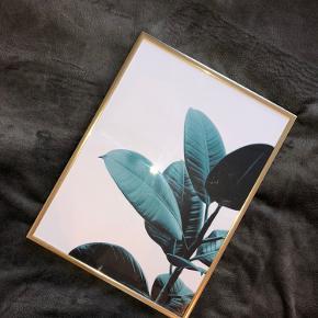 BYD  Mål: 40x30 cm  Desenio plakater  + rammer.  To plakater af blade, kan købes med ramme eller uden.  Sælges helst samlet men helt fint hvis man helst vil have den ene eller uden ramme.