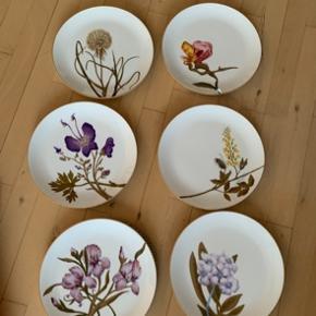 6 tallerkner sælges sammen. 27cm middagstallerkner, alle er 1. sortering og helt nye. Iris og guldregn er UDGÅET