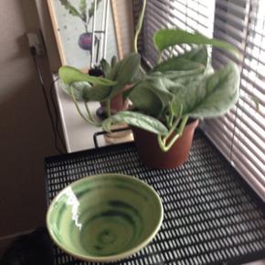 Keramik skål  i flot  grøn farve 🌺🌺