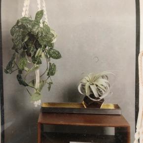 3 stk ophæng til planter køb alle for 75kr Eller stk pris 35kr
