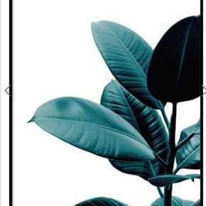 Str: 50x70