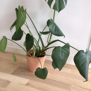 Plante med potteplante.