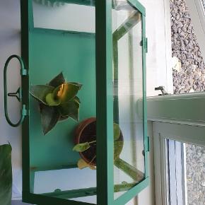 Fint lille drivhus til krydderurter i mint-grøn fra Tiger🌱🌱🌱 Fejler intet, men ville være flot at gøre rent med noget glasrens.