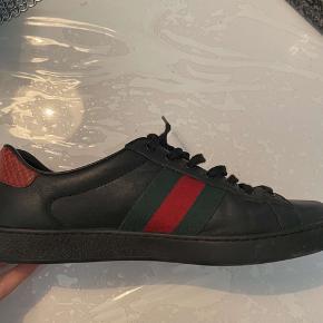 Min bror sælger sine gucci sneakers, som er købt sidste år i Dubai. De blev for små, og derfor er de næsten ikke brugt. Alt medfølger pose, æske og kvitteringen