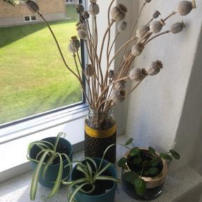 Planter i Potter og tørret blomster.   14kr pr stk