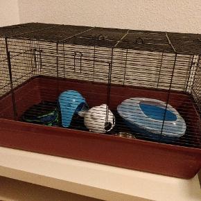 Jeg sælger dette Alaska hamsterbur (fra Zooplus). Der medfølger (eller kan medfølge om man vil) forskelligt tilbehør såsom skåle (flere kan vælges både store og små) drikkeflaske, sputnik hule, kroge til at hænge køjer op med, evt køjer - det kan vi forhandle om. Alt på billedet kan medfølge - endda bordet som buret står på.  Transportkassen kan også vælges til eller fra. Den fås også med blåt låg men så koster kassen i sig selv 50kr.   Jeg tænker en samlet pris på 200kr eller kom med et bud.  Afhentes i Aalborg efter aftale.