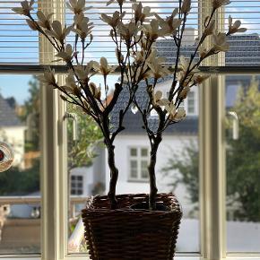 Notre Dame plante