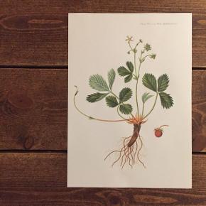 Smukke flora plakater 🌿 Måler 30x21 Kan sendes for 20 kr. via postnord.  Se min profil for flere