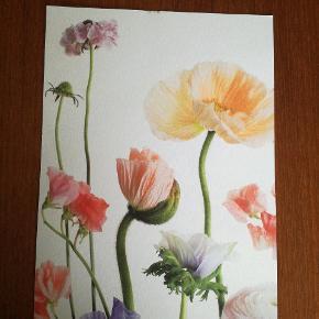 Særtryk; Flowers II  20x15
