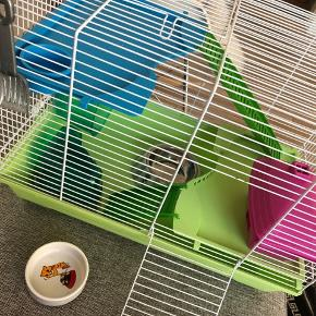 Multicolor hamsterbur.  Til buret følger der - hjul, hus, skål til sand, skål til mad, samt har jeg lidt pet bedding, en kasse med sand (der er taget lidt derfra), en hel pose mad (uåbnet) og nogle enkelte godbidder. Buret er slidt, da vores hamster har kravlet op af buret og bidt den hvide emalje af og prøvet at gnave sig ud 🙈 I kan se op det sidste billeder hvor han også har bidt det i stykker, dette er også lidt i det lyserøde hus, men det er ikke noget man ligger mærke til.  Der er åbning både foran og øverst i buret.   Længde: 44cm Højde: 34cm Dybde: 29cm   Skriv gerne hvis der er nogle spørgsmål 😊