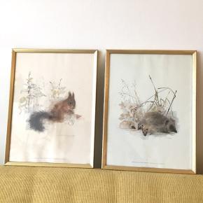 2 super søde håndtegnede vintage kunsttryk/litografier med danske dyremotiver der forestiller egern og pindsvin.  De er gamle - trykt hos Stenders Forlag, som ikke længere eksisterer.   Måler 37 x 27,5 cm og tager sig godt ud i en A3 ramme (medfølger ikke).  Den med egern har desværre en fugtskade og de sælges derfor billigt!   Kan hentes i Åbyhøj eller sendes efter aftale