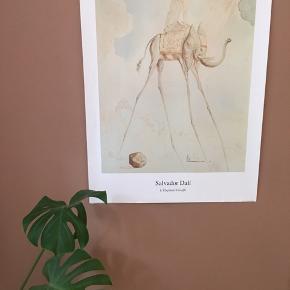 Virkelig flot plakat fra Salvador Dalí - L'e Elephant Giraffe.  Købt i Plakaten på gågaden i Aarhus for nogle måneder siden. Aldrig brugt, originalt rør til transport følger med.   Plakaten måler 70x100 cm.   Kom med et bud!