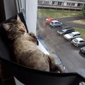 Helt ny, grå katte-hængekøje til vinduet. Har ikke været i brug, da mine vinduer desværre er for små til den. Sættes fast på vinduet med sugekopper og kan holde til katte op til 7 kg (i følge forhandler). Giver din kat mulighed for at ligge og kigge ud af vinduet 😊🐈 * alle billeder er lånt *