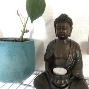Buddha lysestage 😊 flere på lager