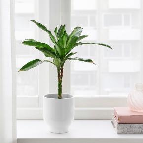 Fejler intet. Kun brugt til kunstige planter.   Prisen er for 2 stk. vaser.