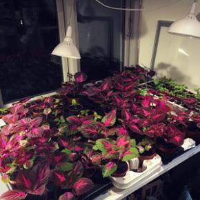 Plantebiksen deltager i værkstedsfællesskabet Atelier Plexus' forårsmarked den 5. Maj 11-17. Adresse: Thorsgade 83 baggården. Mobilepay og kontanter