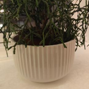 Lyngby skålen 17 cm bred, 10 cm høj. Kan bruges til mange funktioner.   Nypris 450 kr.