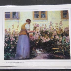30x40 cm plakat af et Skagens maleri  Forestiller kone plukker lyserøde levkøjer foran sit gule hus af Anna Ancher  Aldrig pakket ud  Se også mine andre annoncer for køleskabsmagnetter med Skagens maleri