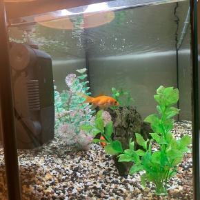 54L akvarie  7 måneder gammel  Alt tilbehør medfølger  Inkl 3 guldfisk og en stor slørhale  BYD gerne, dog kun realistiske bud da fiskene alene har værdi af 500kr.